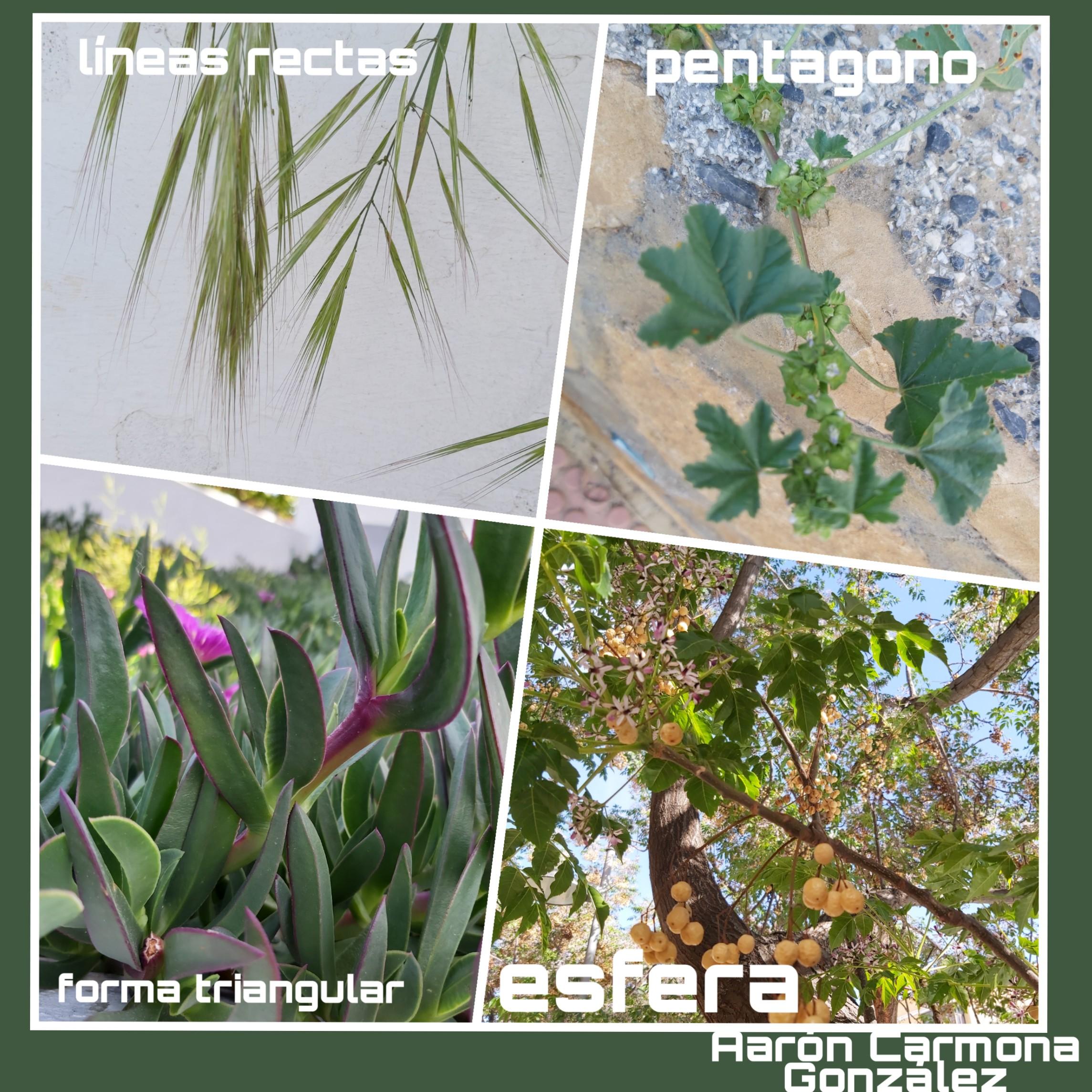 PicsArt_05-06-07.29.02